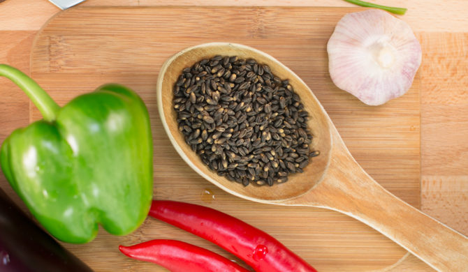 Svart korn (Black Barley)
